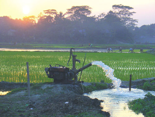 Because of natural and anthropogenic factors, rice fields in Bangladesh have high levels of arsenic, some of which is taken up by rice plants and passed on to the consumer. <strong>Photograph from Kai Udert/<em>Nature Geoscience</em>.</strong>