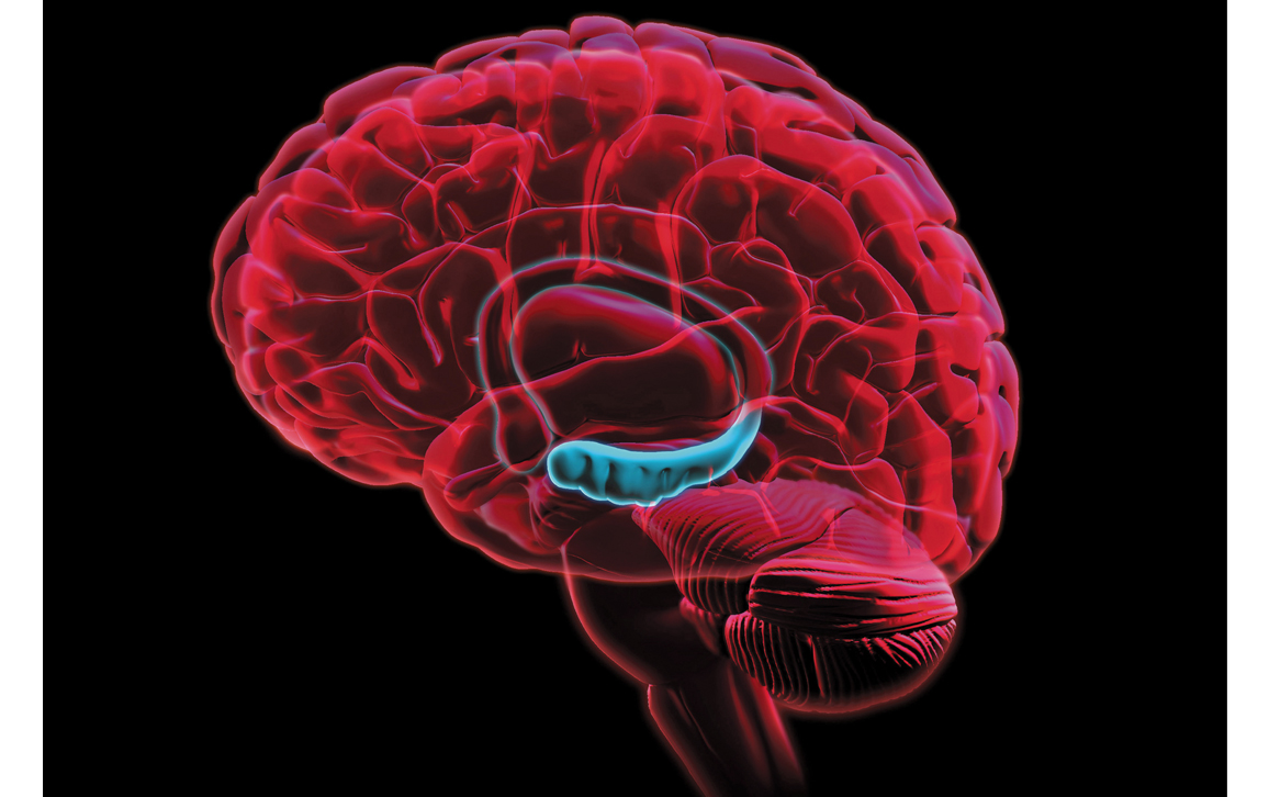 No Evidence For New Adult Neurons | American Scientist