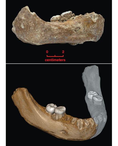 What This Half-Jaw Could Tell Us