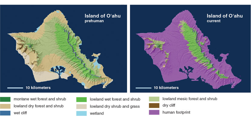 A Hawaiian Renaissance That Could Save the World   American Scientist